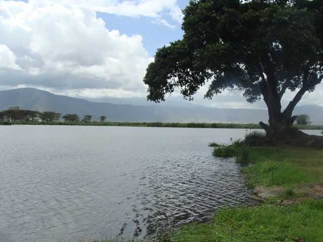 Freshwater lake filled with happy hippos